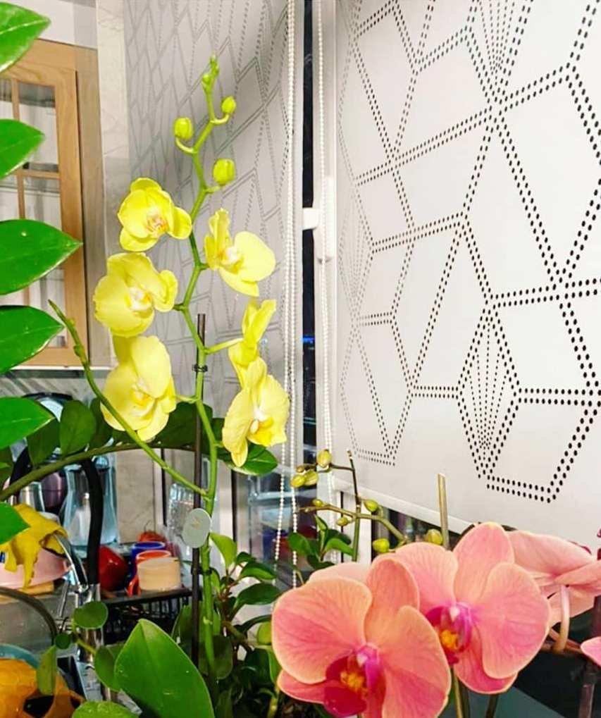 Создавать оформление окна — настоящее искусство, и наша команда владеет им в совершенстве.